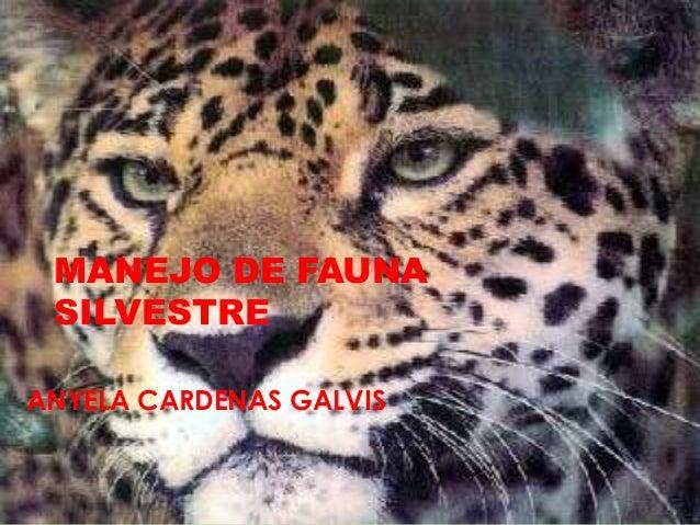 MANEJO DE FAUNA SILVESTRE ANYELA CARDENAS GALVIS