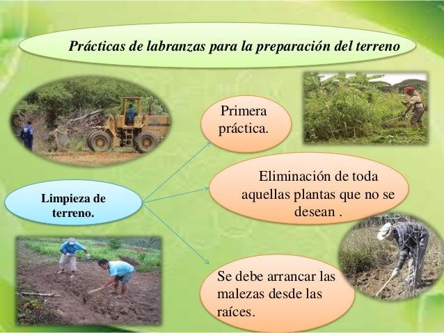 Preparaci n del terreno para el cultivo del caf - Preparacion de la tierra para sembrar ...