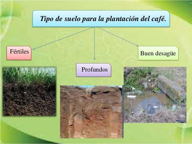 Preparaci n del terreno para el cultivo del caf for Tipos de terreno