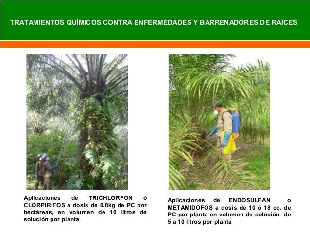 Kontrol Campana de Cultivo Blanco