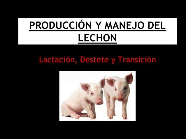 PRODUCCIÓN Y MANEJO DEL  LECHON  Lactación, Destete y Transición