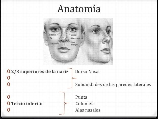 Manejo quirurgico de los 2/3 superiores de la nariz