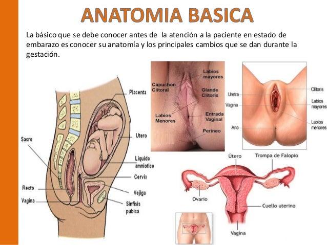 Manejo del paciente en embarazo psf