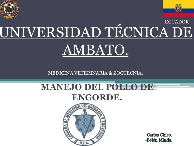 UNIVERSIDAD TÉCNICA DE  AMBATO.  MEDICINA VETERINARIA & ZOOTECNIA.  MANEJO DEL POLLO DE  ENGORDE.  ECUADOR
