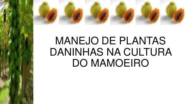MANEJO DE PLANTAS DANINHAS NA CULTURA DO MAMOEIRO