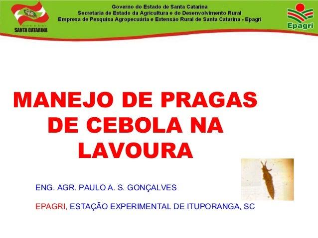 MANEJO DE PRAGAS DE CEBOLA NA LAVOURA ENG. AGR. PAULO A. S. GONÇALVES EPAGRI, ESTAÇÃO EXPERIMENTAL DE ITUPORANGA, SC