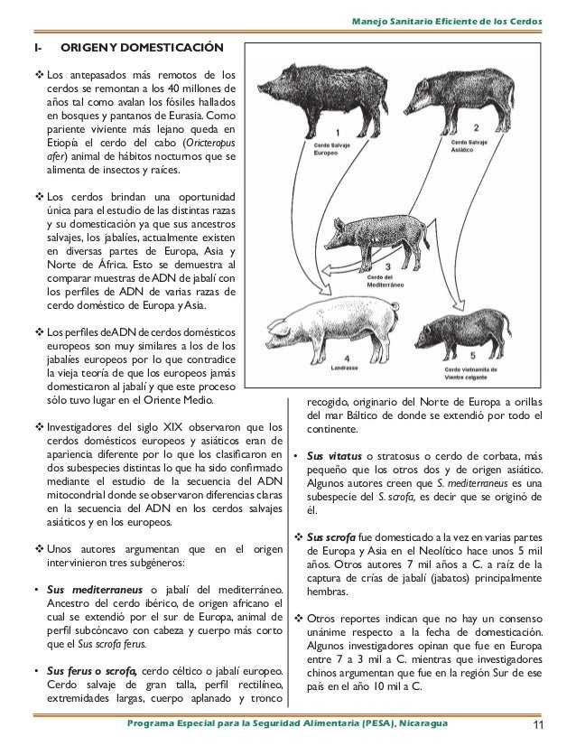 Manejo fitosanitario cerdos