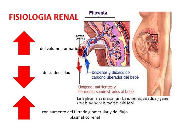Excepcional Cita Anatomía Embarazada Colección de Imágenes ...
