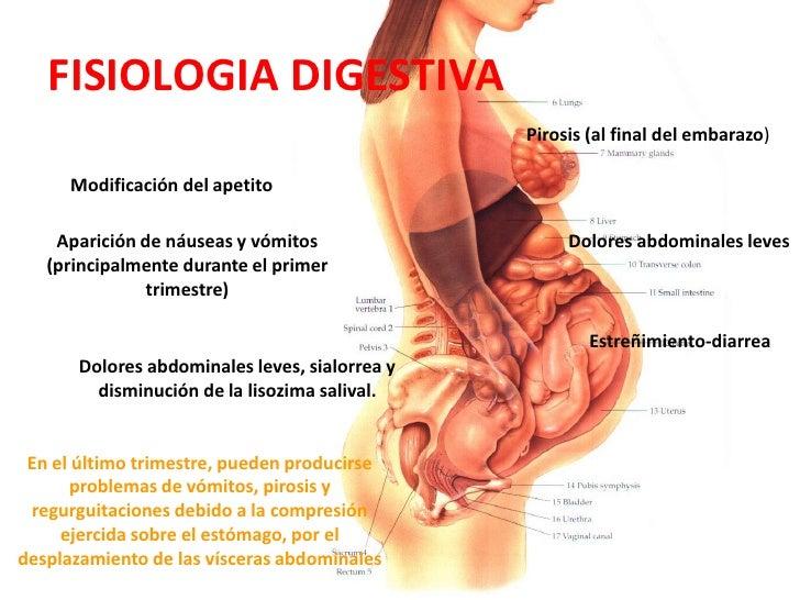 Bonito Anatomía Del Abdomen Embarazada Colección de Imágenes ...