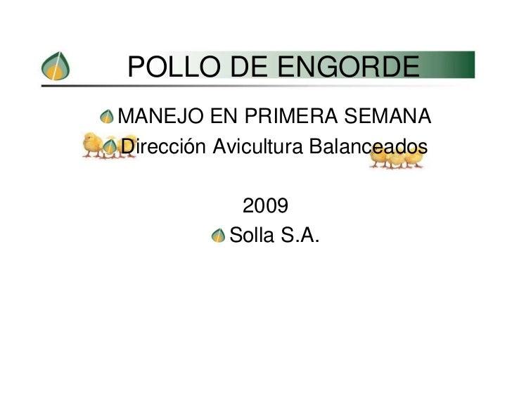 POLLO DE ENGORDE MANEJO EN PRIMERA SEMANA Dirección Avicultura Balanceados              2009            Solla S.A.