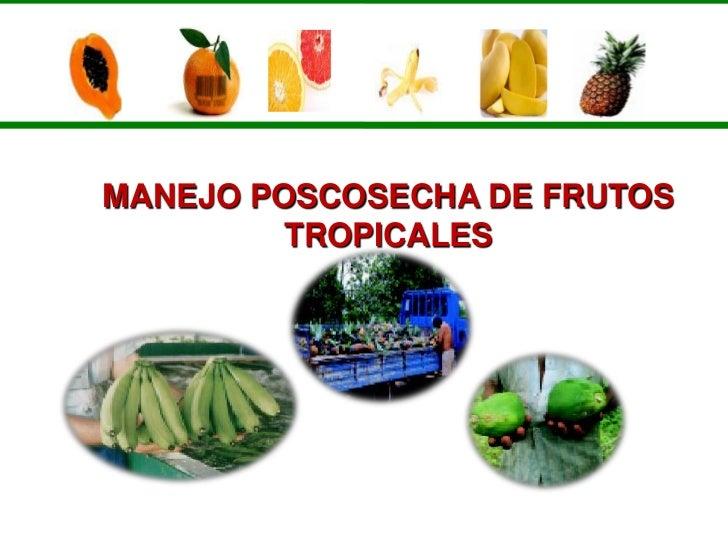 MANEJO POSCOSECHA DE FRUTOS          TROPICALES