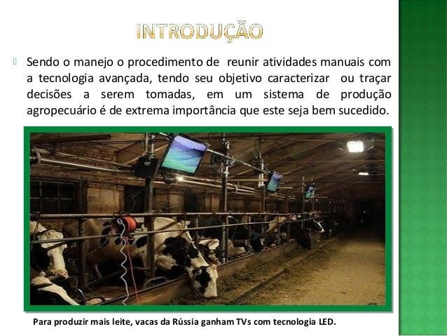 MANEJO BOVINOCULTURA DE LEITE PDF