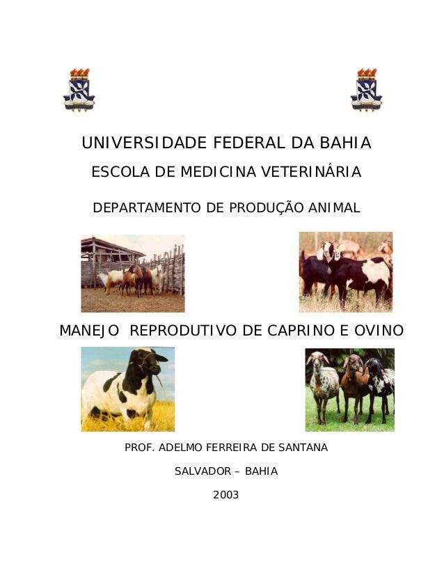 UNIVERSIDADE FEDERAL DA BAHIA   ESCOLA DE MEDICINA VETERINÁRIA   DEPARTAMENTO DE PRODUÇÃO ANIMALMANEJO REPRODUTIVO DE CAPR...