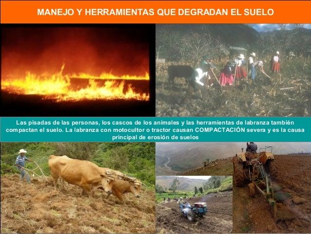 Manejo sustentable de suelos con agricultura de conservación Slide 3
