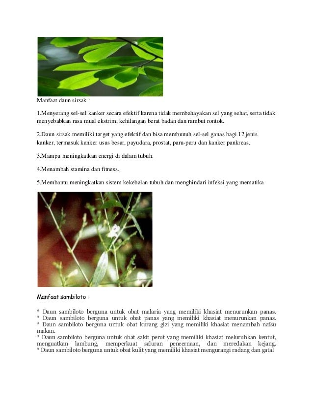 Obat gemuk badan bina syifa mandiri herbal tubuh padat berisi