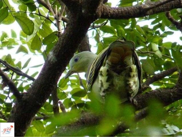 Mangalavanam Bird Sanctuary Slide 3
