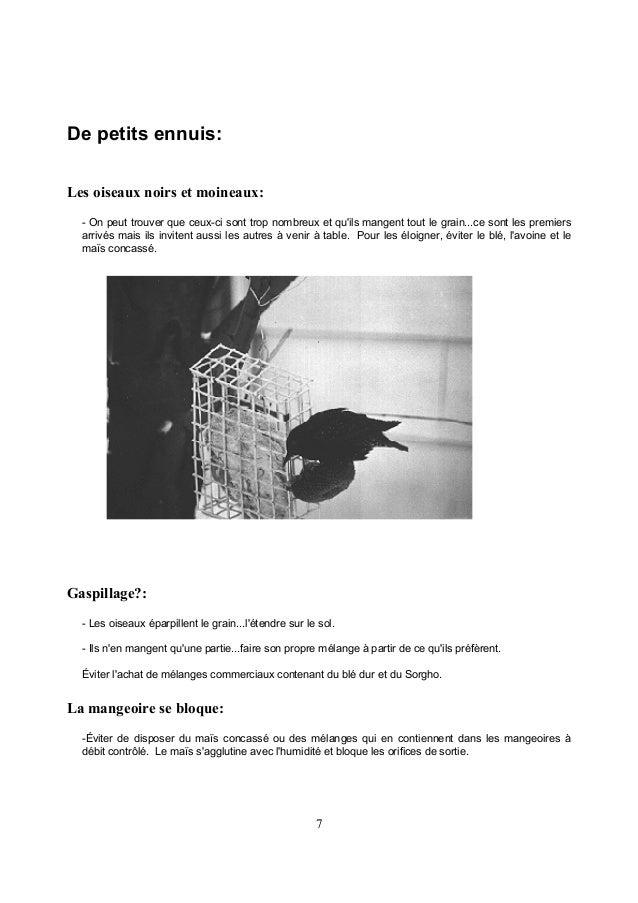 """9 Bibliographie Ouvrages recommandés: CHANTICLEER PRESS INC., 1989, """"Eastern Birds"""", An Audubon handbook, Mc Graw Hill Boo..."""