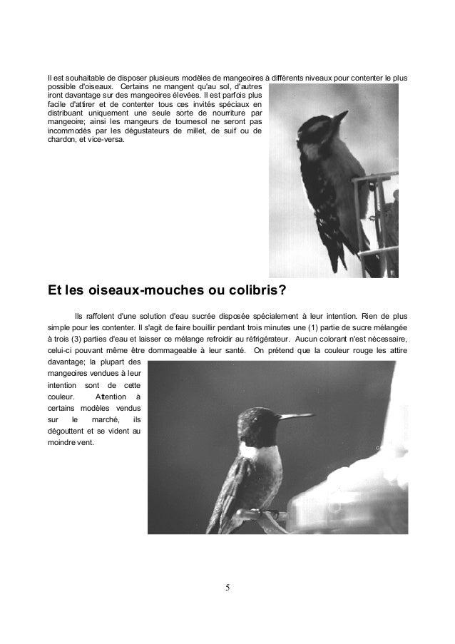 7 De petits ennuis: Les oiseaux noirs et moineaux: - On peut trouver que ceux-ci sont trop nombreux et qu'ils mangent tout...
