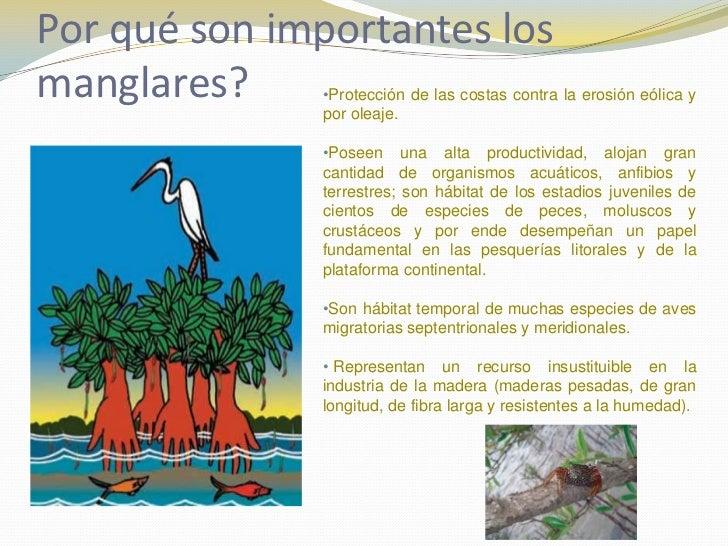 Manglares for Porque son importantes los arboles wikipedia