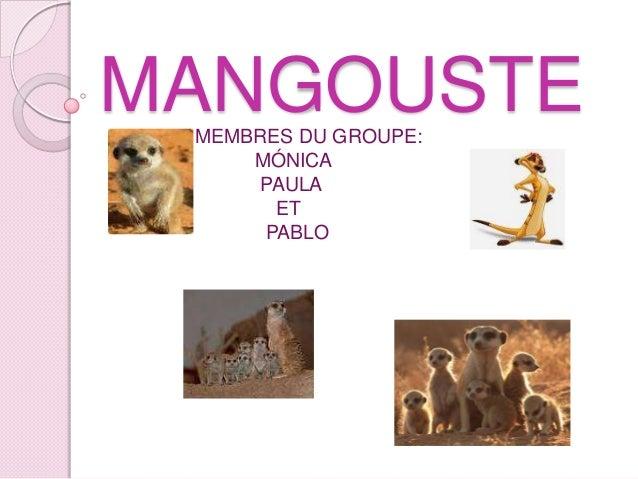 MANGOUSTE MEMBRES DU GROUPE: MÓNICA PAULA ET PABLO