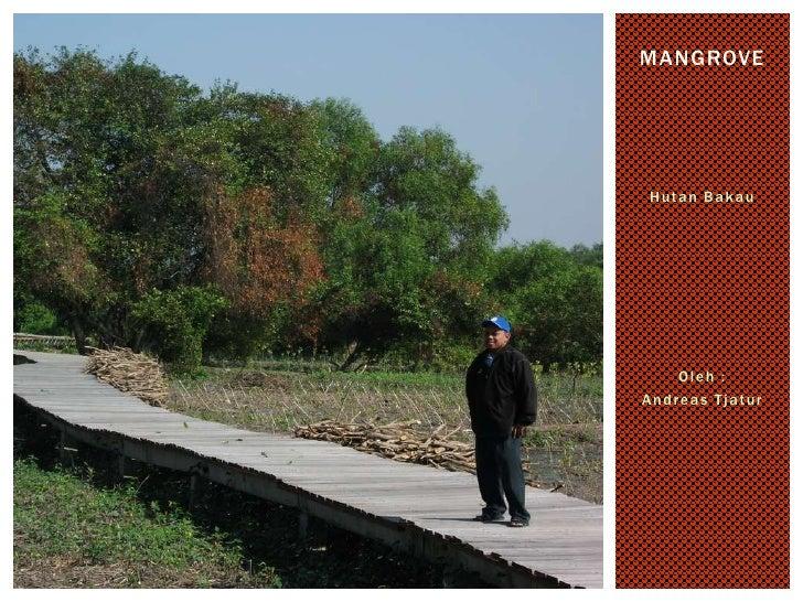 HutanBakau<br />Oleh :<br />Andreas Tjatur<br />Mangrove<br />