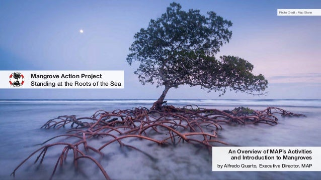 An Overview of MAP's Activities and Introduction to Mangroves by Alfredo Quarto, Executive Director. MAP Mangrove Action P...