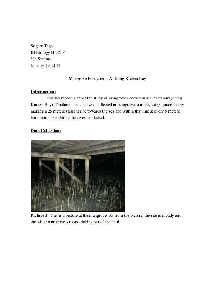 Suguru Taga<br />IB Biology HL 2, P4<br />Mr. Stantus<br />January 19, 2011<br />Mangrove Ecosystems At Kung Kraben Bay<br...