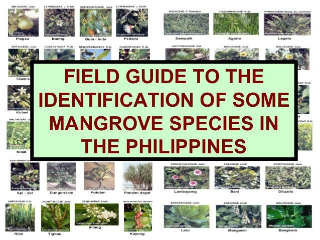 FIELD GUIDE TO THE IDENTIFICATION OF SOME MANGROVE SPECIES IN THE PHILIPPINES