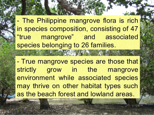 """- The Philippine mangrove flora is rich in species composition, consisting of 47 """"true mangrove"""" and associated species be..."""