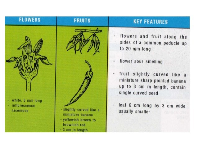 List of Mangrove Species and Their Uses