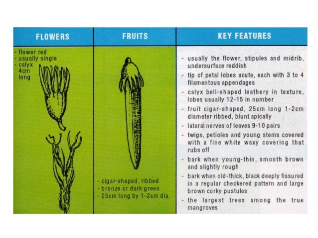 Mangrove field guide