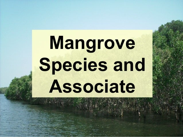 Field guide to the mangroves of queensland.