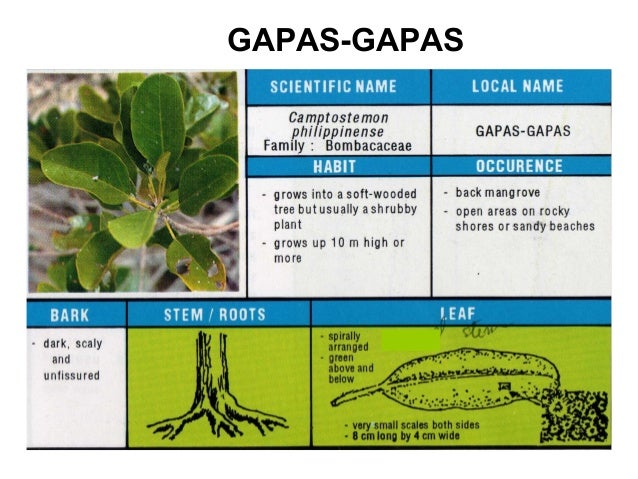 What is the clear identification key to differentiate species from.