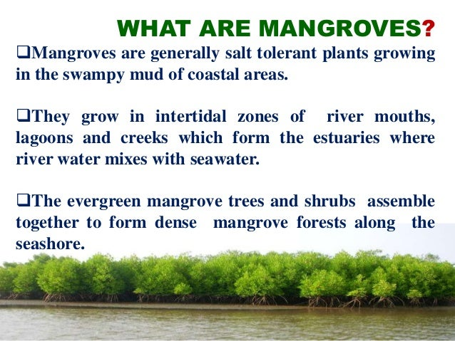mangrove vegetation of southeren east coast Several recent habitat specific studies in the eastern coast reveal the conversion of mangrove areas by local communities for coastal agricultural land development and shrimp farming (ambastha et.