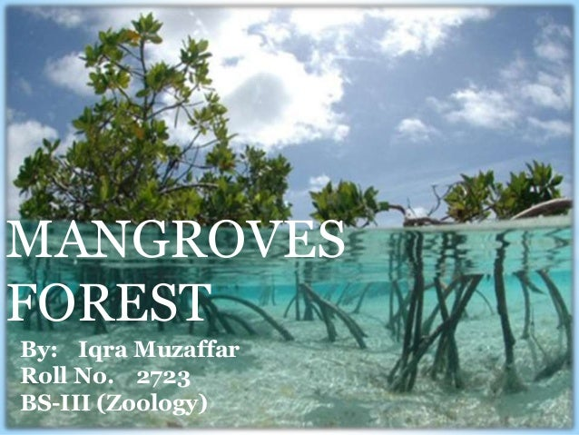 MANGROVES FOREST By: Iqra Muzaffar Roll No. 2723 BS-III (Zoology)