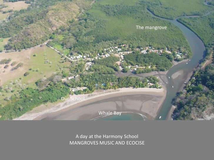 The mangroveOur School              Whale Bay     A day at the Harmony School   MANGROVES MUSIC AND ECOCISE