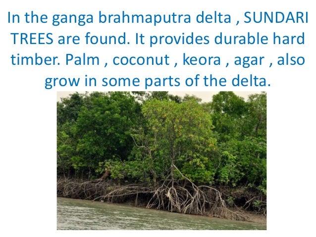 Natural Vegetation And Wildlife Mangrove Trees