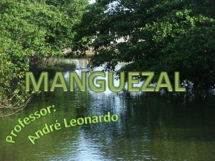 """• O termo """" Mangue """" origina-se do vocábulo  Malaio, """"Manggimanggi"""" e do inglês  mangrove, servindo para descrever as  esp..."""