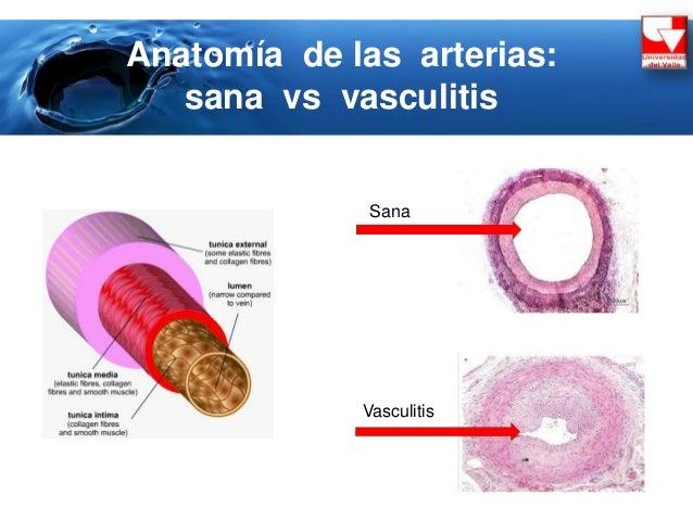 Inmunidad mediada por celulas yahoo dating