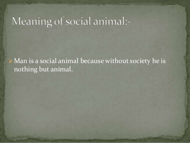 The Social Animal (Brooks book) - Wikipedia
