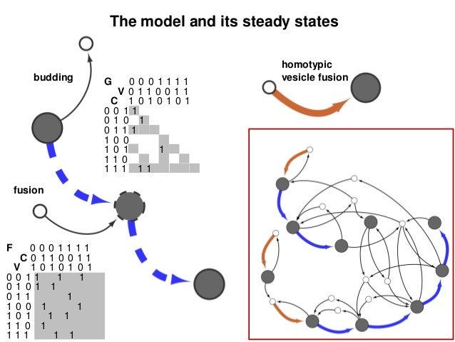Cisternal maturation model