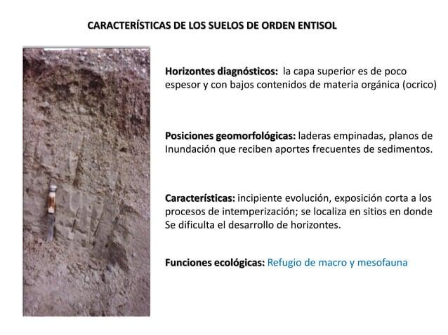 CARACTERÍSTICAS DE LOS SUELOS DE ORDEN ENTISOL Horizontes diagnósticos: la capa superior es de poco espesor y con bajos co...