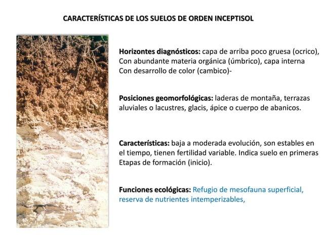 CARACTERÍSTICAS DE LOS SUELOS DE ORDEN INCEPTISOL Horizontes diagnósticos: capa de arriba poco gruesa (ocrico), Con abunda...