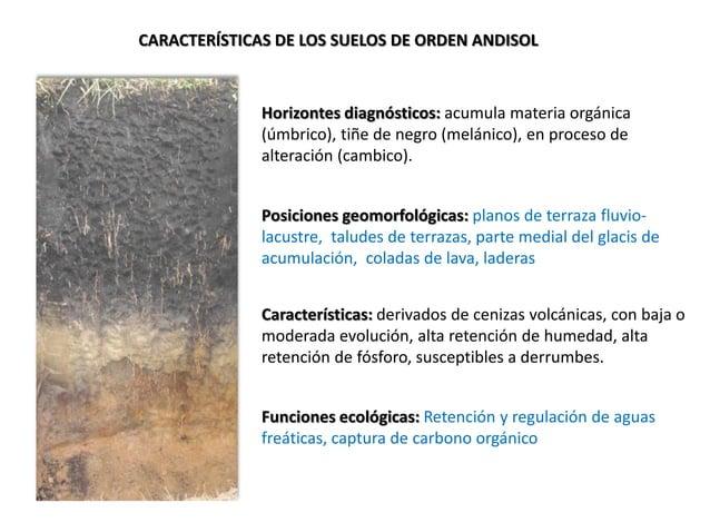 CARACTERÍSTICAS DE LOS SUELOS DE ORDEN ANDISOL Horizontes diagnósticos: acumula materia orgánica (úmbrico), tiñe de negro ...