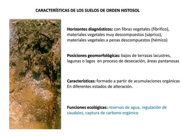 CARACTERÍSTICAS DE LOS SUELOS DE ORDEN HISTOSOL Horizontes diagnósticos: con fibras vegetales (fíbrifico), materiales vege...
