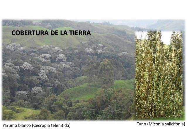 No. ORDEN LONGITUD (km) NÚMERO DE SEGMENTOS RELACIONES LONGITUD (RL) BIFURCACIÓN (RB) 1 1,07 3 2 80,27 3 0,01 3 363,16 72 ...