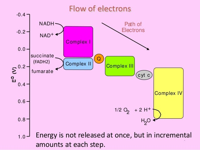 Electron Transport Chain Etc