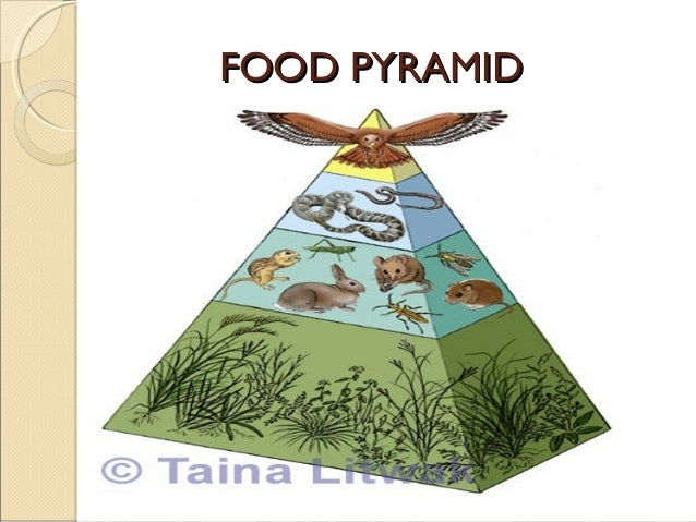 Balance In Nature Due To Food Chain