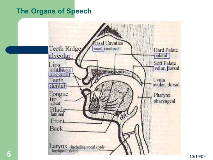 Manner of articulation the organs of speech 101909 ccuart Choice Image