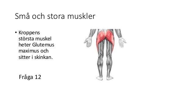 Hur många muskler finns i kroppen